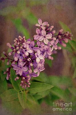 Digital Art - Lilacs by Krista-