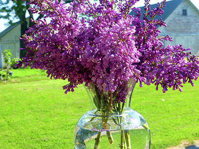 Fushia Photograph - Lilacs On Clear Base by Tina M Wenger