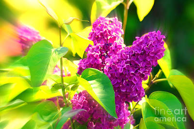 Photograph - Lilacs by Susanne Van Hulst