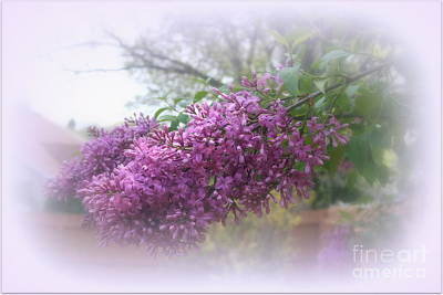 Photograph - Lilacs Symbolize Love by Kay Novy