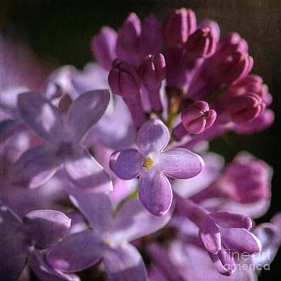 Photograph - Lilacs by Tamara Becker