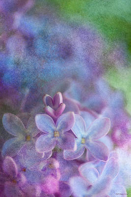 Photograph - Lilacs by WB Johnston