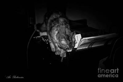 Photograph - Lili At Night Activity by Arik Baltinester