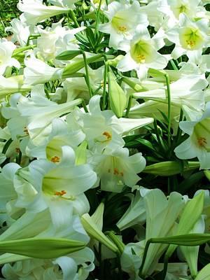 Lilies 11 Art Print by Anna Villarreal Garbis