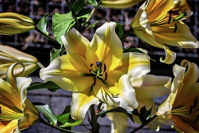 Photograph - Lilies And Chile by John Haldane