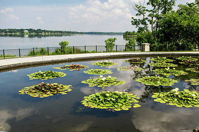 Photograph - Lilies And The Lake by Allen Sheffield