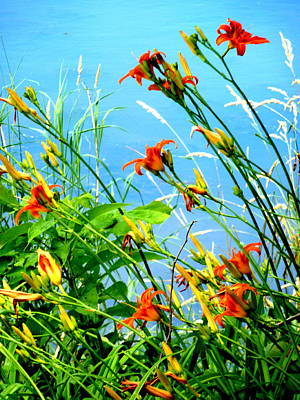 Photograph - Lilies At Sheldon Marsh by Beth Akerman