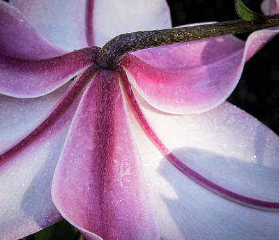 Art Print featuring the photograph Lilies Backside by Jean Noren
