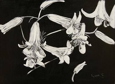 Drawing - Lilies Black And White by Elizabeth Lane