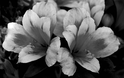 Photograph - Lilies Black And White by James C Thomas