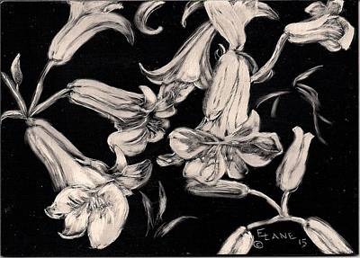 Drawing - Lilies Black And White II by Elizabeth Lane