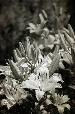 Photograph - Lilies  Black And White by Susan McMenamin