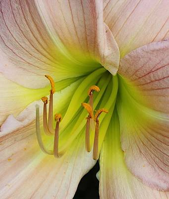 Lilies Delight Art Print by Bruce Bley