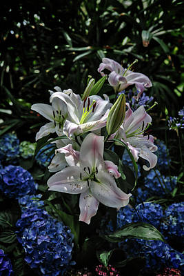 Photograph - Lilies For Mother by John Haldane