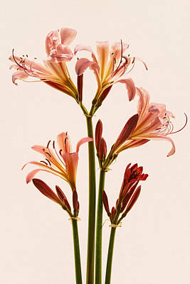 Photograph - Lilies Forever by Leda Robertson