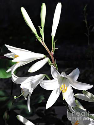 Vibrant Photograph - Lilies by GabeZ Art