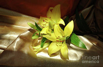 Sun Casting Shadow Photograph - Lilies Horz On Satin by Georgia Sheron