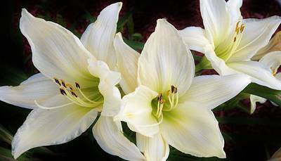 Photograph - Lilies In The Garden by Bruce Bley