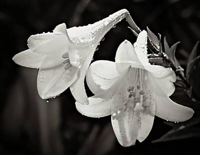 Photograph - Lilies In The Rain by Sheri McLeroy