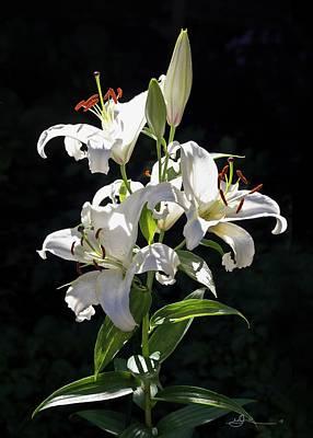 Photograph - Lilies In The Sun by Bill Linn