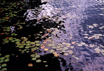 Art Print featuring the photograph Lilies In The Water by Lyle Crump