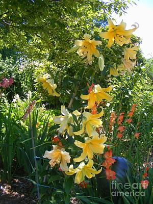 Photograph - Lilies In Yellow by Nancy Kane Chapman