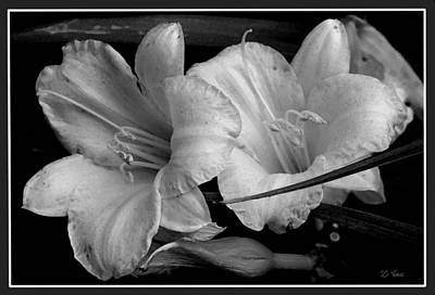 Photograph - Lilies by James C Thomas