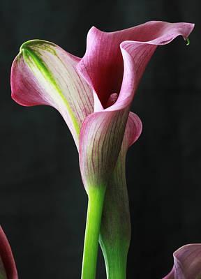 Lilies Art Print by Lise-Lotte Larsson