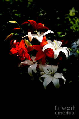 Photograph - Lilies by Marcia Lee Jones