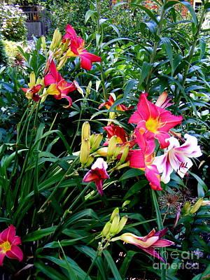 Photograph - Lilies  by Nancy Kane Chapman