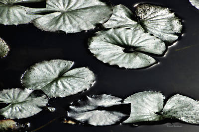 Photograph - Lilies Of The Deep by Donna Blackhall