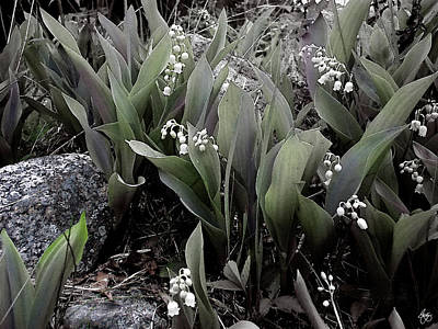 Photograph - Lilies Of The Valley Mindscape No 2 by Wayne King