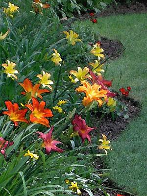 Photograph - Lilies On Parade by Carolyn Jacob