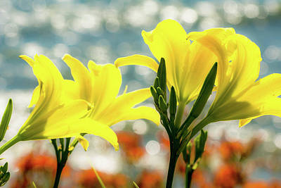 Photograph - Lilies by Patti Raine