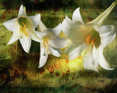 Digital Art - Lilies With Light by Sandra Schiffner