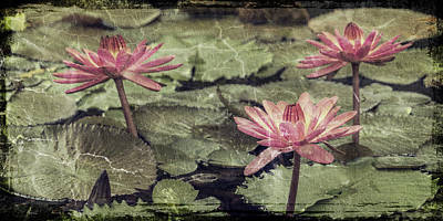 Photograph - Lilies_dsc1900 by Greg Kluempers