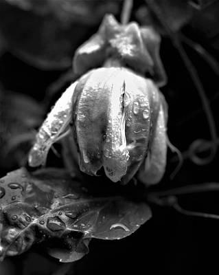 Lilikoi Photograph - Lilikoi Budding by Heidi Fickinger