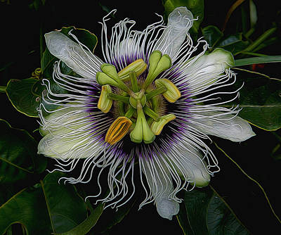 Lilikoi Passion Fruit Art Print by Pamela Walton