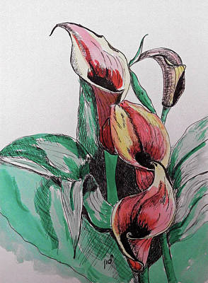 Flower In Pen And Ink Drawing - Lillie by Maria Woithofer