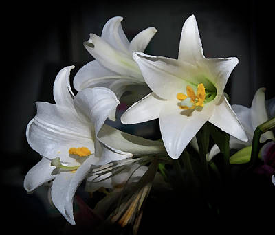Photograph - Lillies by Odille Esmonde-Morgan