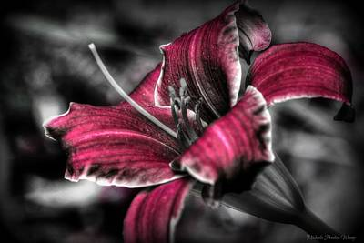 Photograph - Lilly 3 by Michaela Preston