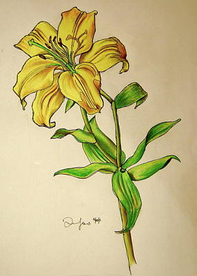 Lillies Drawing - Lilly by Emily Jones