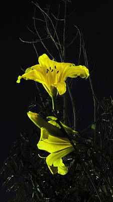 Photograph - Lilly In The Evening by Charles Ables