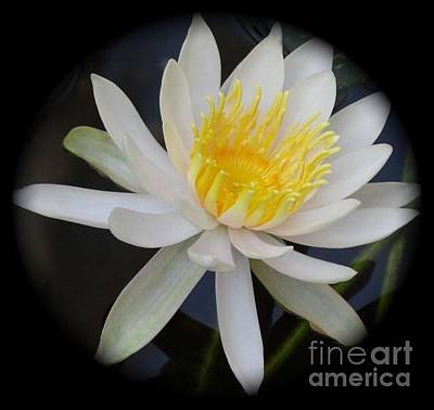 Photograph - Lilly by Linda Xydas