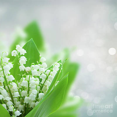 Photograph - Lilly Of The Valley Bouquet  by Anastasy Yarmolovich
