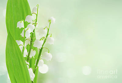 Photograph - Lilly Of The Valley In Blue Mist by Anastasy Yarmolovich