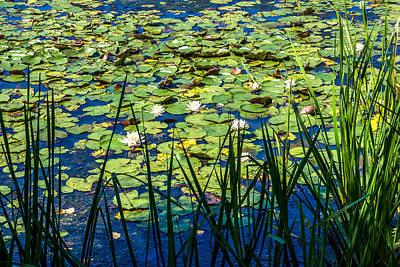 Photograph - Lilly Pad Pond by Andrew Kazmierski