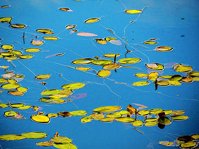 Photograph - Lilly Pad Pond by Dennis Bucklin