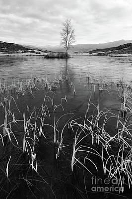 Lilly Tarn, The Lake District Art Print