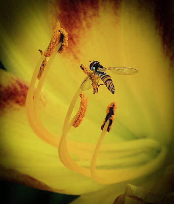 Photograph - Lilly Visitor by Jean Noren
